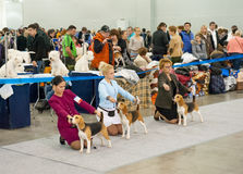 International Dog Show CACIB-FCI Royalty Free Stock Image