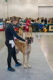 International Dog Show CACIB-FCI Royalty Free Stock Photos
