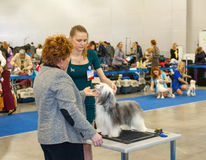 International Dog Show CACIB-FCI Stock Photography