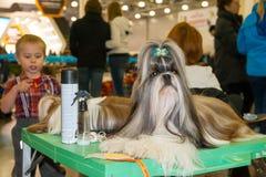 International Dog Show CACIB-FCI Stock Images