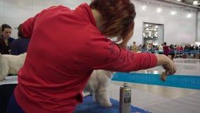 International Dog Show CACIB-FCI stock footage