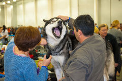 International Dog Show CACIB-FCI Royalty Free Stock Photography