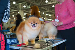 International Dog Show CACIB-FCI Stock Photos