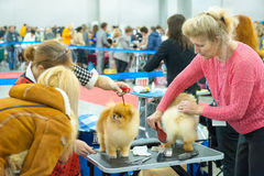 International Dog Show CACIB-FCI Royalty Free Stock Photo