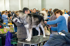 International Dog Show CACIB-FCI Royalty Free Stock Photos