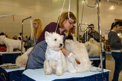 International Dog Show CACIB-FCI Stock Image