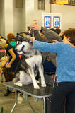 International Dog Show CACIB-FCI Stock Image