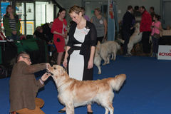 International dog show Duo CACIB in Brno Royalty Free Stock Photos