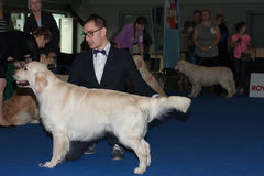 International dog show Duo CACIB in Brno Stock Images