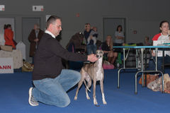 International dog show Duo CACIB in Brno Stock Photo