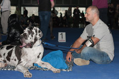 International dog show Duo CACIB in Brno Royalty Free Stock Photography