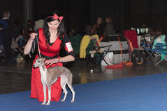 International dog show Duo CACIB in Brno Stock Image