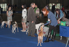 International dog show Duo CACIB in Brno Royalty Free Stock Photo