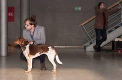 International dog show Duo CACIB in Brno Royalty Free Stock Photos