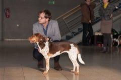 International dog show Duo CACIB in Brno Stock Photos