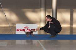 International dog show Duo CACIB in Brno Stock Photo