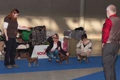 International dog show Duo CACIB in Brno Stock Image