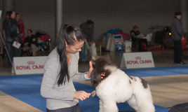 International dog show Duo CACIB in Brno Stock Photography