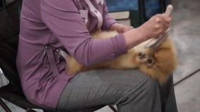 International Dog Show stock video