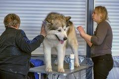 International dog show Stock Photos