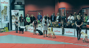 International dog show Stock Photo