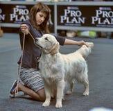 International dog show royalty free stock image