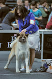 International dog show Royalty Free Stock Photos