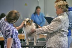 International dog show Stock Images