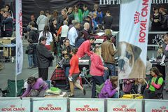 International dog show Royalty Free Stock Photo