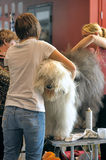 International dog show Royalty Free Stock Images