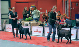 International dog show Stock Photos