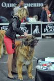 International dog show Royalty Free Stock Image