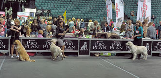 International dog show Stock Photography
