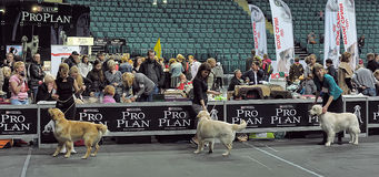International dog show Stock Image