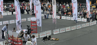 International dog show Stock Photo
