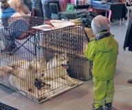 International dog show Stock Photography