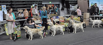 International dog show Royalty Free Stock Photography
