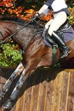 International eventing Royalty Free Stock Photography
