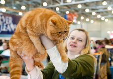 International exhibition of cats Royalty Free Stock Photos