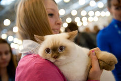 International exhibition of cats. MOSCOW - MARCH 6: Unidentified people visit an international exhibition of cats Catsburg on March 6, 2011 in the exhibition royalty free stock photography