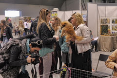 International exhibition of dogs Stock Photo