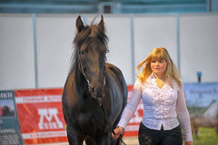 International Horse Exhibition Stock Photo