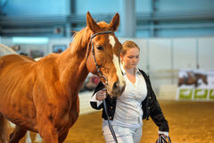 International Horse Exhibition Stock Photography