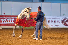 International Horse Exhibition Stock Images