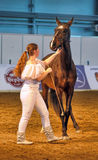 International Horse Exhibition Royalty Free Stock Images