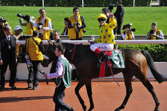 International Horse Racing in Hong Kong Royalty Free Stock Image