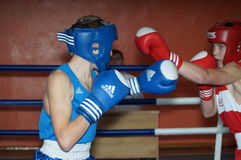 International Junior championship Boxing in Gomel (Belarus). Royalty Free Stock Photos