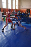 International Junior championship Boxing in Gomel (Belarus). Stock Image