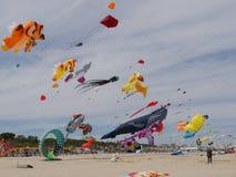 International Kite Festival 2016 Royalty Free Stock Photos