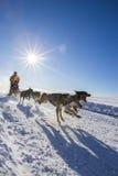 International Lanaudiere Dog sledding race 2015 Royalty Free Stock Photo